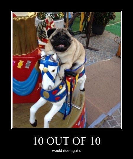 dogs,merry go round,funny