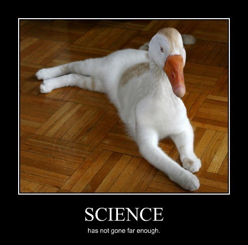 ducks science Cats funny