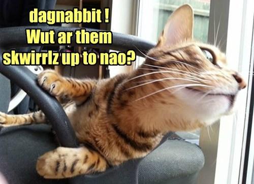 dagnabbit !  Wut ar them skwirrlz up to nao?