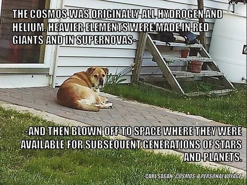 dogs helium science quote funny