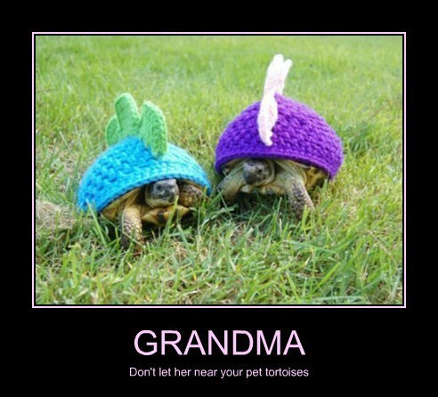 cute cozy funny tortoise hats - 8202647552