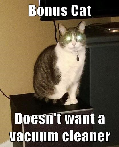 Bonus Cat  Doesn't want a vacuum cleaner