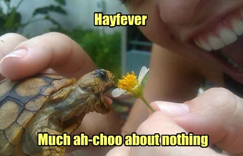 allergies hay fever puns turtles