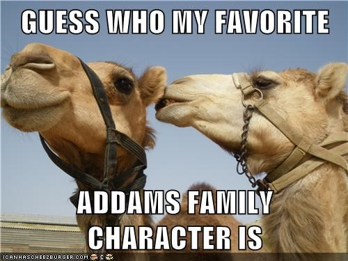 Adams Family,camels,funny,hump day