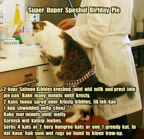 Super Duper Speshul Birfday Pie 2 kupz Salmon Kibbles krushed, mixt wid milk and prest intu pie pan. Bake many minuts until krusty. 2 kans toona spred ober krusty kibbles, lik teh kan 1 kup shwedded yello cheez Bake mor minuts until melty Garnish wid katnip leebes. Serbs 4 kats or 2 bery hungree kats or one 1 greedy kat. In dat kase, hab sum wet ragz on hand tu kleen trow-up.