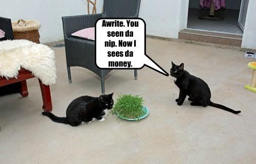 Cats catnip funny - 8203502080