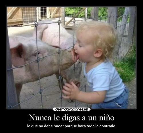 bromas Memes curiosidades animales - 8203514880