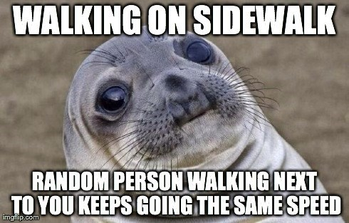 awkward seal awkward situation seal - 8203566592