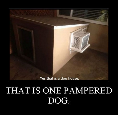 apartment dog house funny wtf - 8203594496