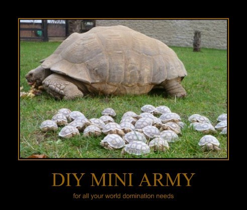 Babies,turtles,military,tortoise