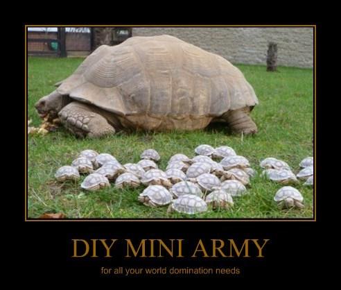 Babies turtles military tortoise - 8203697152