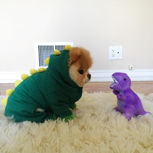 cute,puppies,dog costumes