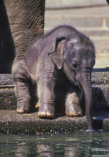 Babies cute elephants water - 8203719424