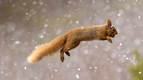 cute,donuts,jump,snow,squirrel