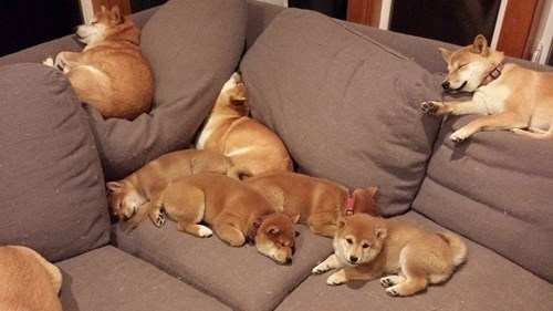 cute puns puppies sofa