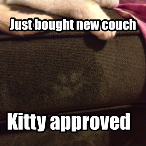 cute,approve,couch,furniture,funny