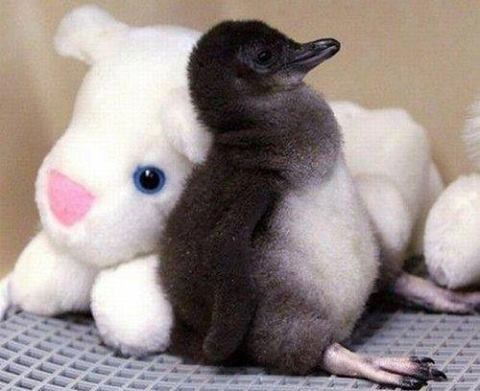 stuffed animals,penguins,cute
