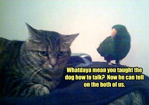 Cats dogs talk parrots