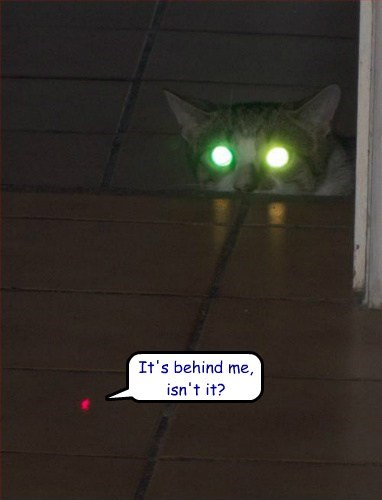 Cats,doomed,funny,red dot