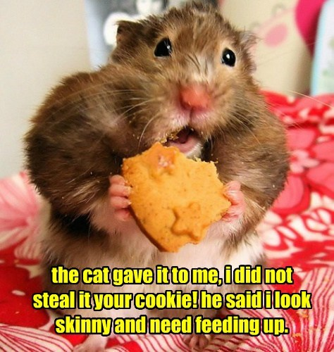 the cat gave it to me, i did not steal it your cookie! he said i look skinny and need feeding up.