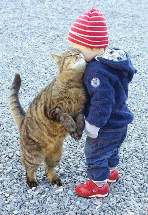 Babies cute love Cats - 8204893952
