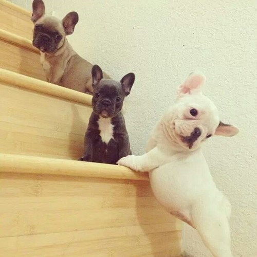 cute dogs games puppies stairs - 8204915200