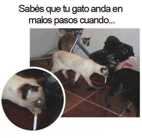 Memes animales gatos bromas - 8204928256