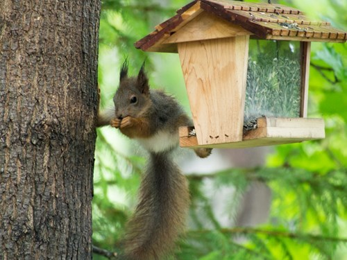 cute funny ninja squirrel - 8204941824