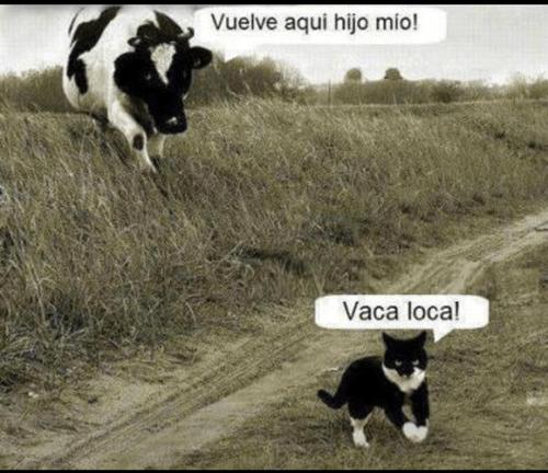 animales gatos bromas - 8204959232