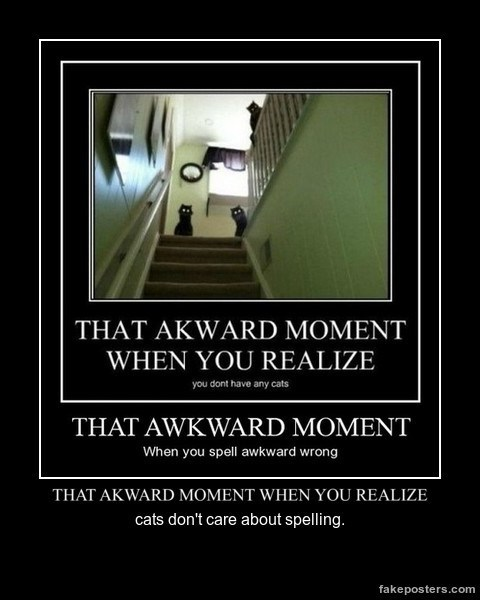 Awkward Cats funny spelling wtf - 8205019392