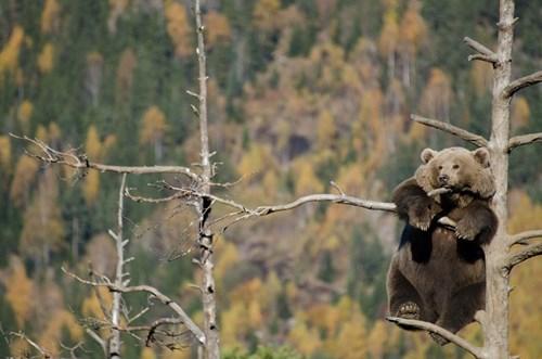 bears,funny,keep calm