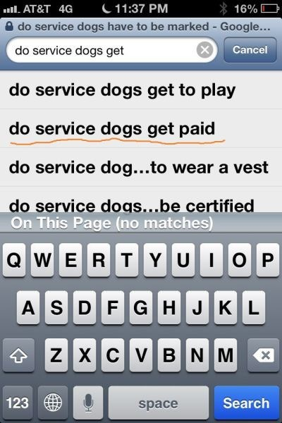 dogs pets autocomplete - 8205171456