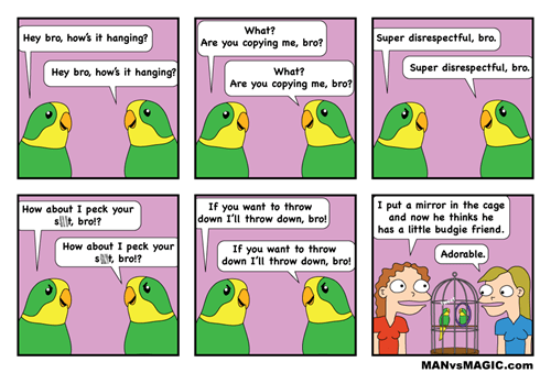 cages,birds,mirrors,web comics