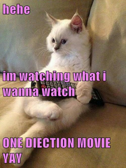 Hehe Im Watching What I Wanna Watch One Diection Movie Yay Lolcats Lol Cat Memes Funny Cats Funny Cat Pictures With Words On Them Funny Pictures Lol Cat Memes Lol Cats It's hard to resist kittens. cheezburger