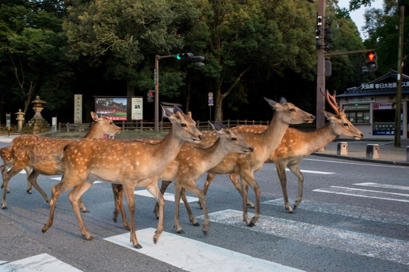 photography Street Art deer Japan - 8205317