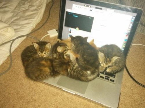kitten cute warmth laptop - 8205371904