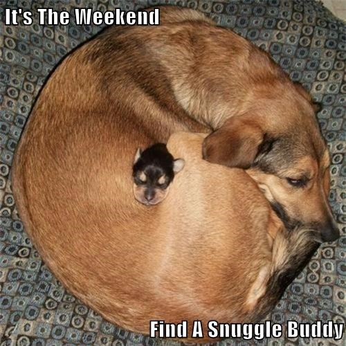cute,dogs,snuggle