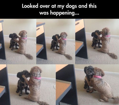 cute dogs hugs love - 8205911040