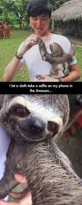 sexy times sloths funny pictures - 8205920512