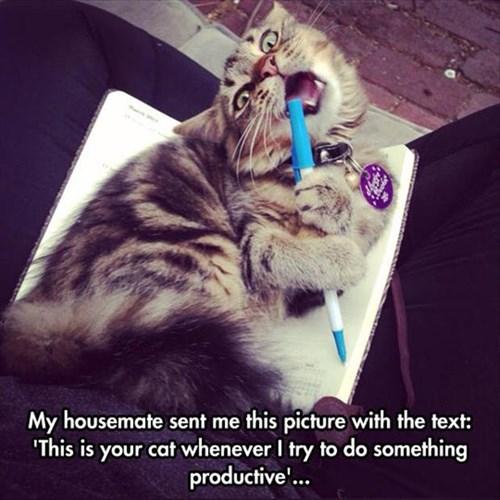homework distraction Cats - 8206025728