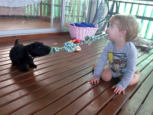 dogs,kids,puppy,parenting,tug of war