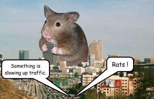rats,puns,giant,traffic