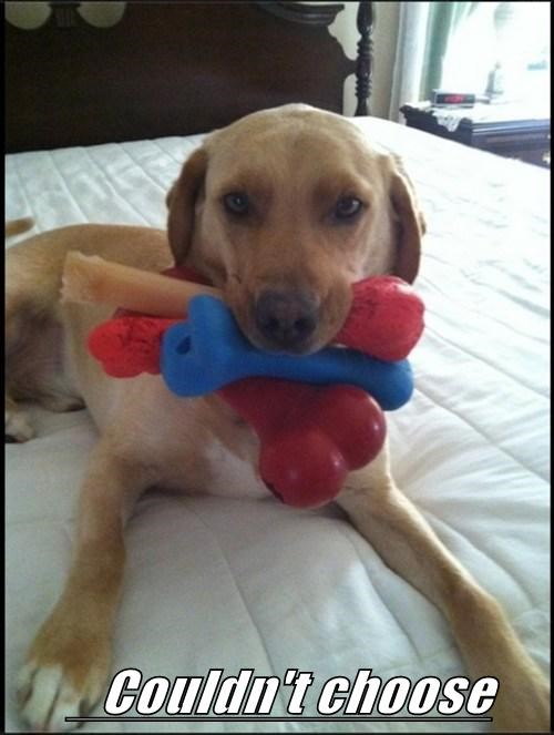 dogs,toys,choices