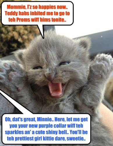 Mommie, I'z so happies now.. Teddy habs inbited me to go to teh Proms wiff hims tonite.. Oh, dat's great, Minnie.. Here, let me get you your new purple collar wiff teh sparkles an' a cute shiny bell.. You'll be teh prettiest girl kittie dare, sweetie..