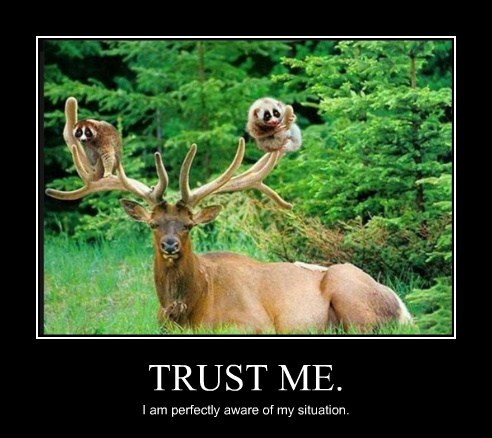 friends,cute,elk,trust me
