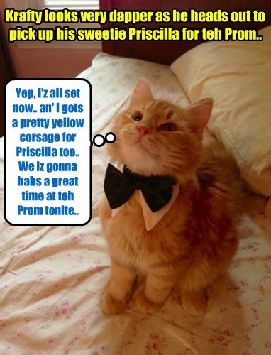 Krafty looks very dapper as he heads out to pick up his sweetie Priscilla for teh Prom.. Yep, I'z all set now.. an' I gots a pretty yellow corsage for Priscilla too.. We iz gonna habs a great time at teh Prom tonite..