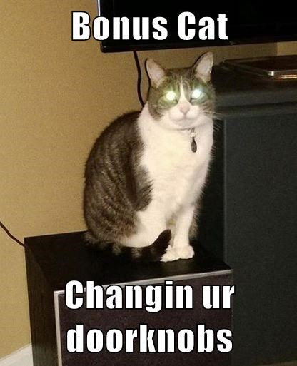 Bonus Cat  Changin ur doorknobs