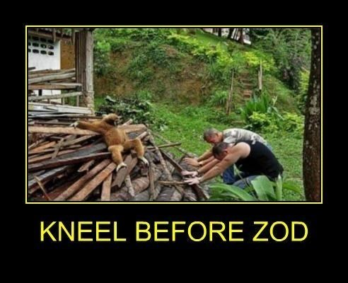 wtf zod kneel funny - 8207423488