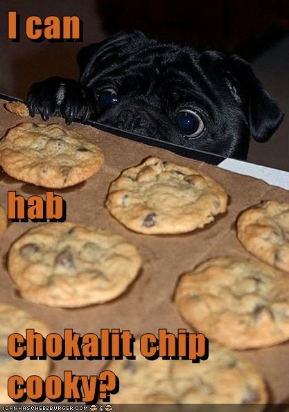 dogs,chocolate,cookies
