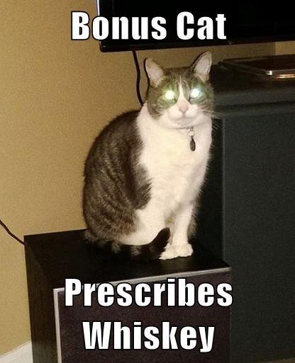 Bonus Cat  Prescribes Whiskey